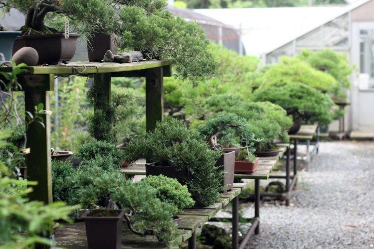 khu vườn tươi tốt